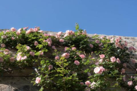 Jardin des senteurs © Alex Nollet