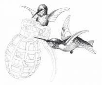Dessin colibris © Dorothée Clauss